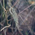 """Clear Spider Web"" by DiegoRe"