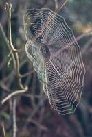 Clear Spider Web