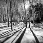 """""""Shadows In the Snow"""" by RHMiller"""
