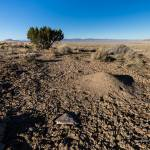 """Desert scene with ant hill and mud"" by Landscapes"