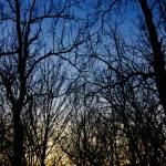 """Winter Crescent Moon"" by KsWorldArt"