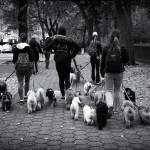 """""""Dog Walking"""" by JessicaJenney"""