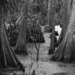 """Mangrove Swamp IMG_9868"" by rayjacque"