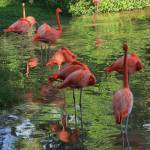 """Flamingo Sleepover IMG_3320"" by rayjacque"