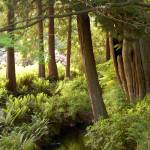 """""""Green Forest in Stanley Park Vancouver, BC"""" by dcruzin"""