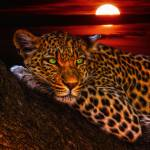 """Leopard At Sunset"" by ImageMonkey"
