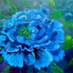 """Blue Peony"" by jennylee"
