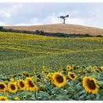 """""""Sentinels TuscanyPS_11x14"""" by mountain_exposure"""