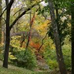 """""""October Trees"""" by KsWorldArt"""