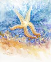 starfish returning to the sea