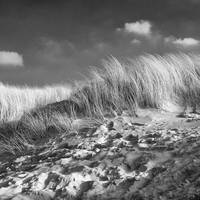 Only Dunes 2 BW