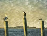 Three Birds On A Pier