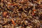 "Fresh Crab Korean Market by James ""BO"" Insogna"