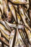 """Fresh Fish Marketplace by James """"BO"""" Insogna"""