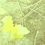 """Yellow leaves will not be forgotten"" by Kosmopolites"