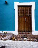 Cats of Old San Juan