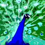 """peacock"" by stuart-price"