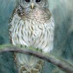 """Barred Owl artspan print highres"" by LisaMclaughlin"