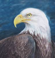 proud bald eagle