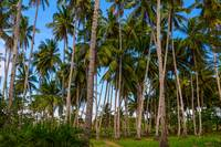 Coconut Jungle Paradise