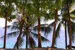 "Coconut Trees Ocean Scenic View by James ""BO"" Insogna"
