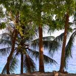 """Coconut Trees Ocean Scenic View"" by lightningman"
