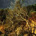 """""""Brilliant Desert"""" by RCdeWinter"""