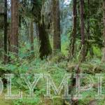 """Hoh Rainforest of Olympic National Park"" by rYgardner"