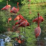 """Square Flamingo Sleepover IMG_3320"" by rayjacque"