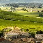 """Bordeau Vineyards"" by mjphoto-graphics"