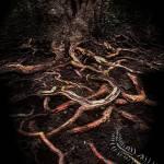 """Mangrove Veins"" by ecolosimo"