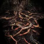 """Mangrove Veins"" by ecolosimo"