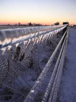 Icy fence at dusk