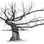 """Tree with Gnarled, Twisted Bare Branches, Pencil"" by joyart"