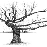 Tree with Gnarled, Twisted Bare Branches, Pencil Art Prints & Posters by Joyce Geleynse
