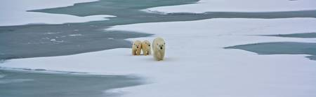 Mother Winter and Cubs