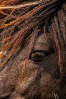 Horses Soul Is Thru The Eye