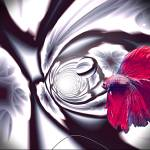"""""""IN THE TUNNEL with Betta Fish & White Marble Balls"""" by ecolosimo"""