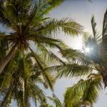 """""""Tropical Sun"""" by lightningman"""