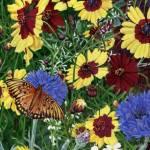 """Butterfly SpringWildflower Garden Still Life Flora"" by walt-curlee"