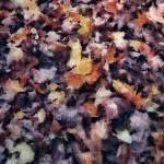 Impression of Fall