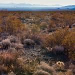 """Life in Death Valley"" by Mun_Sing"