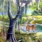 Florida Backwoods- White-tail Trophy