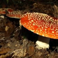 MushroomsToadstools gallery