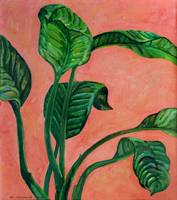 Dancing Dieffenbachia Leaves