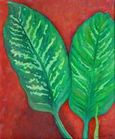 Two Dieffenbachia Leaves