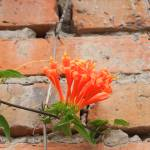 """Orange Flowers and Adobe Wall"" by rhamm"