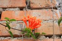 Orange Flowers and Adobe Wall