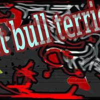pit bull terier Art Prints & Posters by siniša (sine) berstovšek (sinonim)