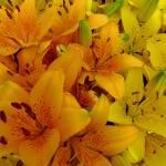 """""""Lilies"""" by joeyartist"""